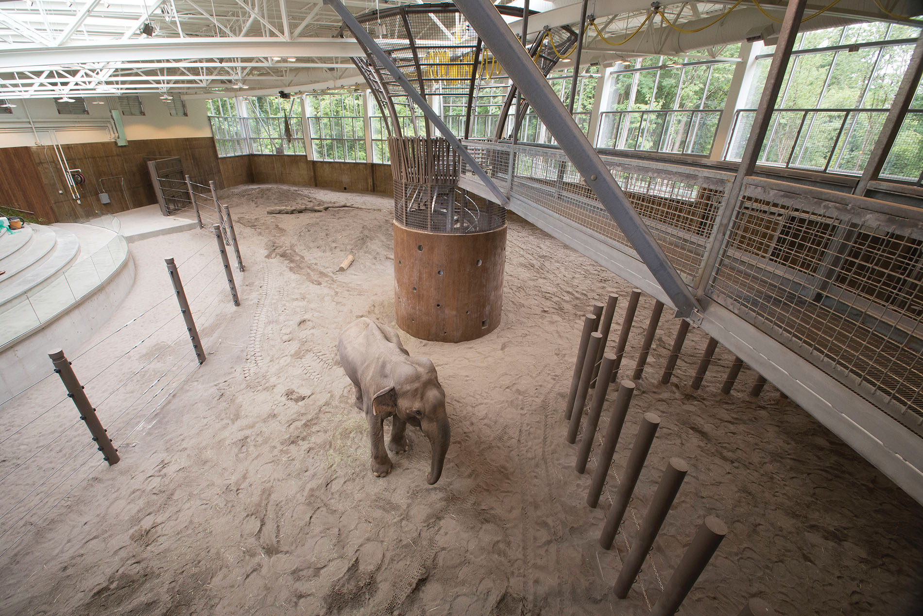 Bull Asian elephant Tusko visits Forest Hall for the first time.