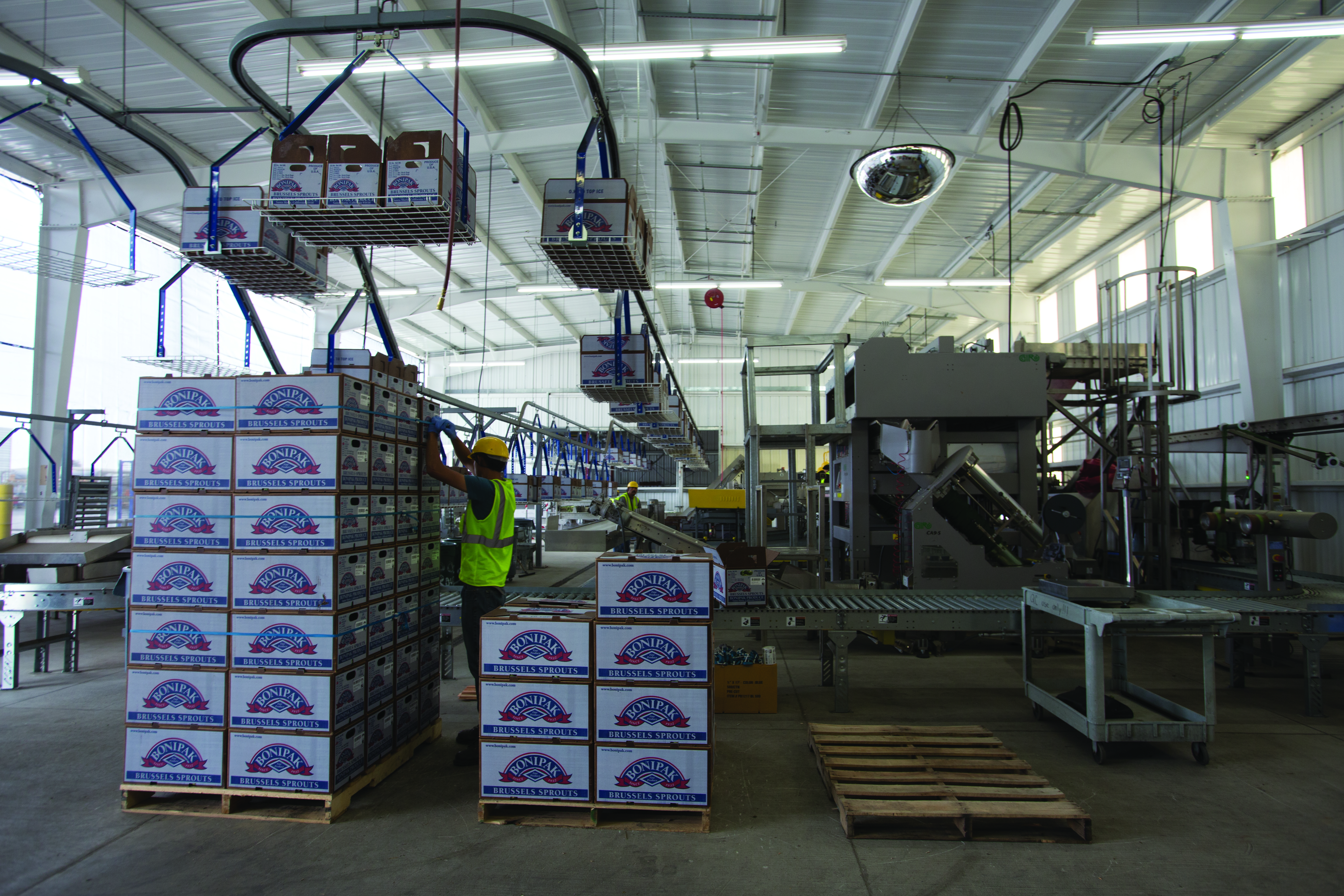 An overhead conveyor system delivers empty cartons to the boxing area.