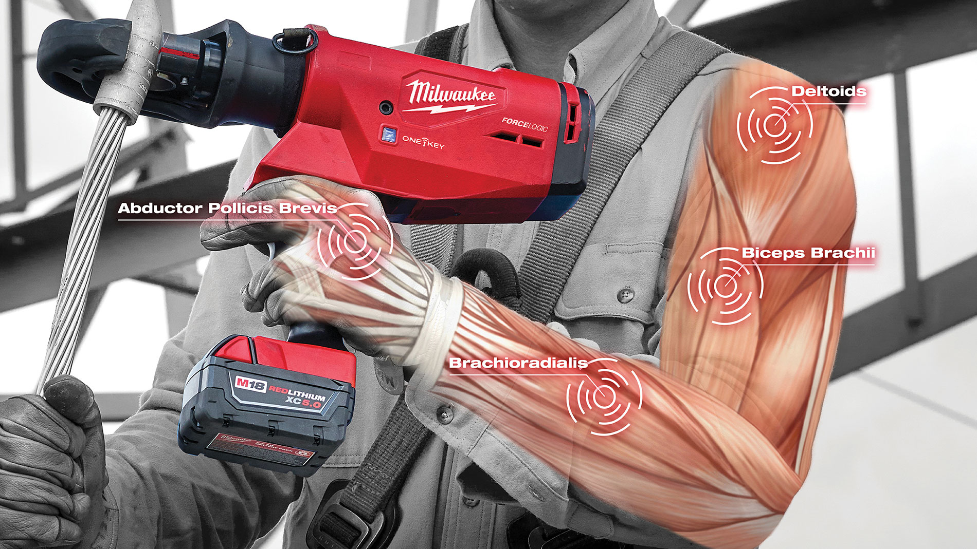 Milwaukee illustration showing the muscles used to operate power tools