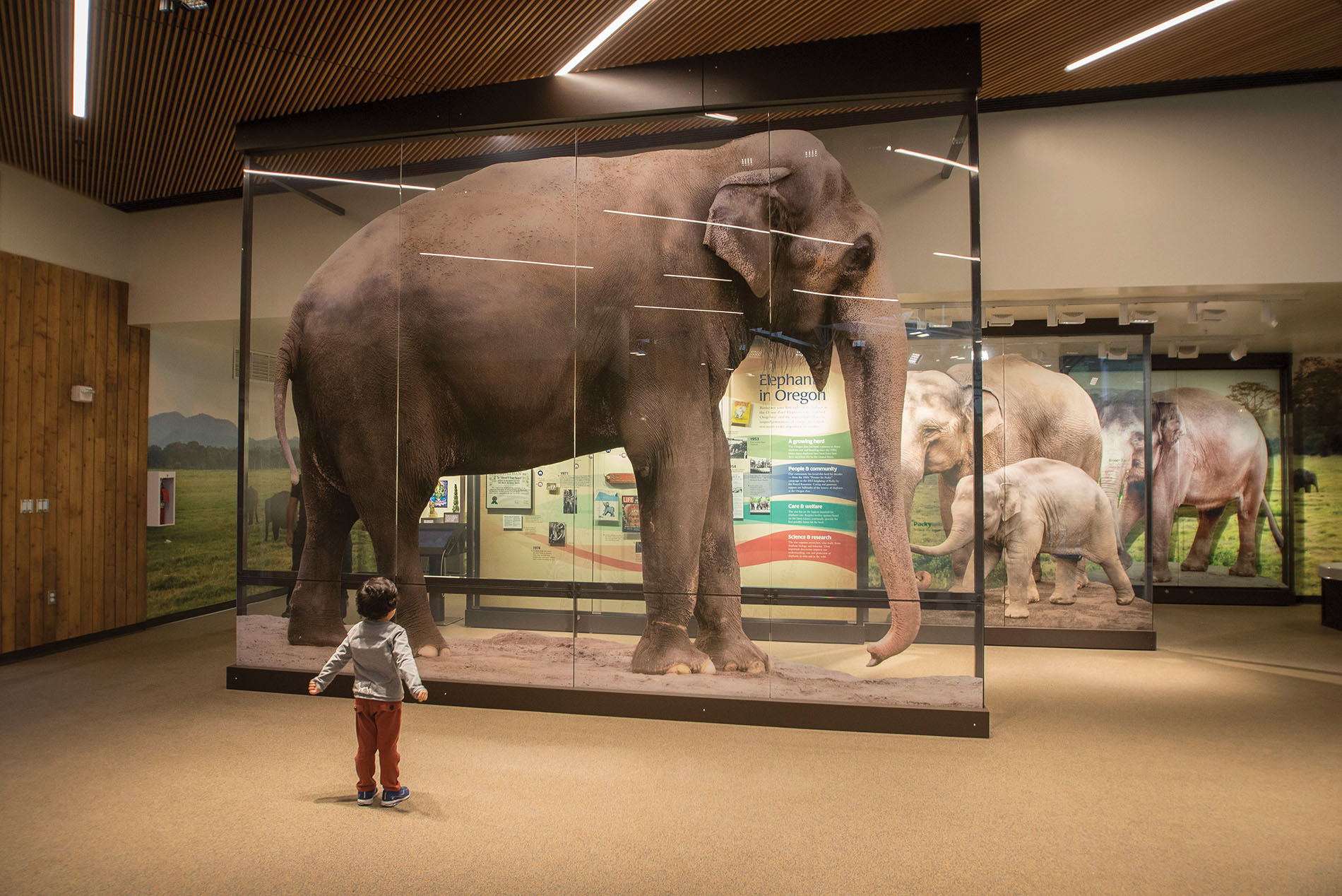 A child is dwarfed by a photo of Packy in Forest Hall.