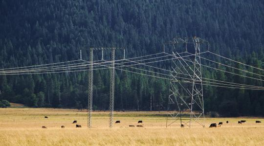 High-voltage transmission lines pass through a pasture with livestock underneath