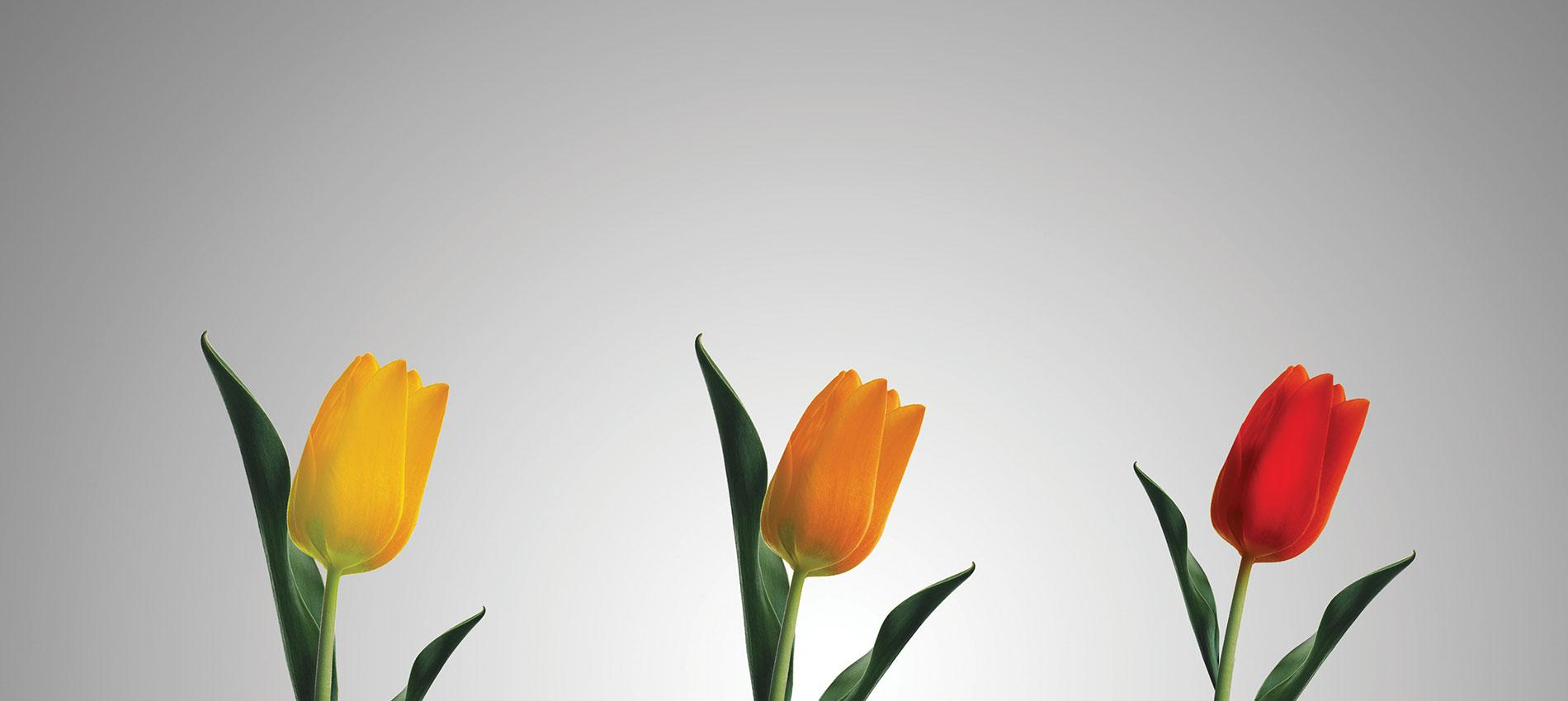 Three tulips each growing out of the base of a lamp | Shutterstock / Designs Stock